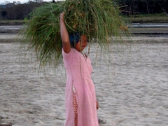 A Nepalese girl carries a bundle of straw through Chitwan National Park