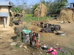 A quintessential Nepalese country scene; near Chitwan National Park
