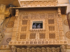 Two doves nestled in a gorgeous Jaisalmer window