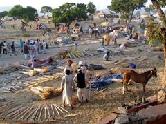 Rakes for sale; Pushkar Camel Festival