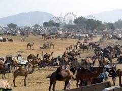 Snapshot of the Pushkar Camel Festival