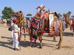 Can you imagine this camel's humiliation at being paraded around the Pushkar fair?