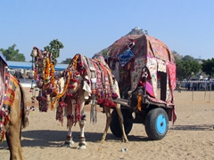 "Winner of the 2004 Pushkar Camel ""Beauty Contest"""
