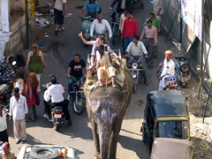 An elephant competes against tuk-tuks and pedestrians; Udaipur