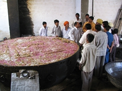 Yes, there are over 1,500 KG of sweet porridge cooked in this monstrosity of a pot; Karni Mata Temple; Bikaner