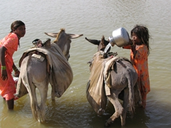 Young girls filling up water bladders from a nearby lake; Jaisalmer desert