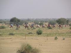 Camel caravan carrying an Explore tour group; Jaisalmer