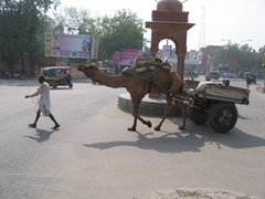 Taking a stroll with his camel; Bikaner