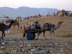 Litter is strew everywhere at the Camel Festival; Pushkar