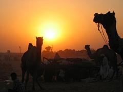 Sunset at Pushkar Camel Fest