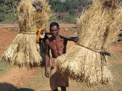 Kutia tribal man carrying a load of hay