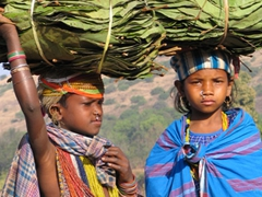Bonda girls carrying leaves for sale