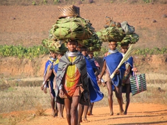 Bonda tribal women on the way to the weekly Bonda market