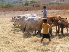 Children are expected to contribute in a farming community