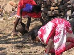 Maria tribal women picking up flowers for fermentation in their home-made brew