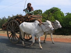 A common sight on India's roads