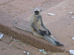 Lounging monkey at Udaigiri Cave Complex