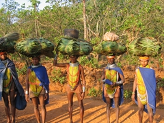 Bonda Tribeswomen on the way to the market