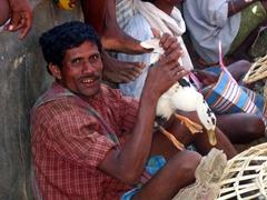 Fresh duck for sale; Narayanpur Muria Tribal market