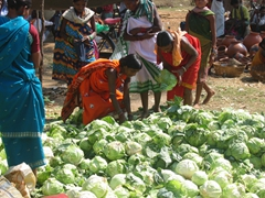 Picking out the freshest cabbage; Mardoom market