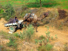 We've seen every variation of mode of transport in India. Here, a camel cart trudges along by the side of the road