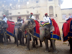 Elephant herders await their first customers in the early morning hours at Jaipur's Amber Palace