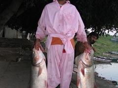 Proud fisherman displaying two huge freshwater fish
