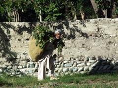 This old man carries a heavy load but makes it look easy