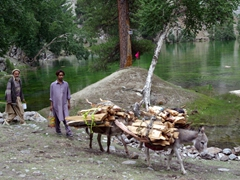 Donkey transport is a reliable (and cheap) means of carrying firewood