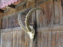 Large ibex horns are mounted to the exterior of Baltit Fort