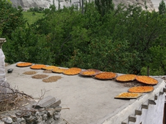 Sun dried apricots line the rooftops of just about every house in Karimabad
