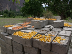 Sun dried apricots are a Northern Pakistan summer tradition...in every town and village, we noticed blankets of apricots strewn everywhere!