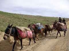 A horse train; Deosai National Park