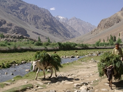 Donkeys are a common mode of transport in this part of Pakistan