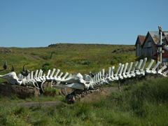 Whale skeletons line the driveway of this home in Djúpivogur
