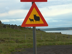 Traffic yield signs for horses, sheep and goats...only in Iceland!