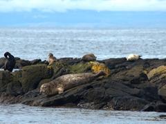 Seals are a common sight off of Vatnsnes Peninsula