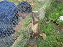 Robby plays with Freddy, an orphaned arctic fox at the Súðavík Arctic Fox Center