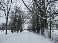Picture perfect winter drive through Estonia