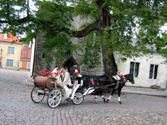 Romantic wedding cart near Alexander Nevsky Cathedral; Toompea Hill