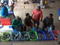 Malé fish market scene