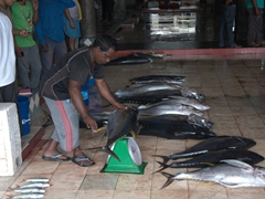 Weighing tunas at the Malé fish market