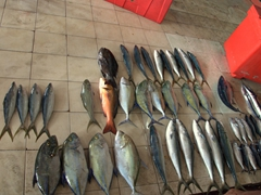 A wide variety of fish for sale at the Malé fish market