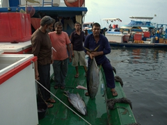 The proud fisherman holds up his catch of the day; Malé