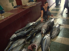 Becky measures how big the tuna is; Male fish market