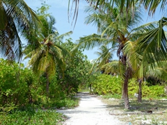 A footpath leading to the beach on Hulhumale Island