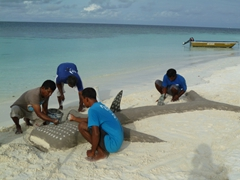 Maldivian crew from another boat building a whale shark replica by their beach side BBQ; Raidhiga Island