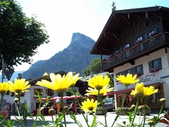 Pretty spring blossoms soak up the sun's rays; Oberammergau