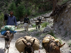 We have to make way for the donkeys that are carrying goods down from Fairy Meadows
