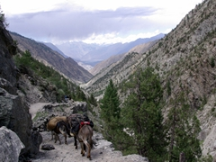"Another view of the ""donkey convoy"" making their way downhill"